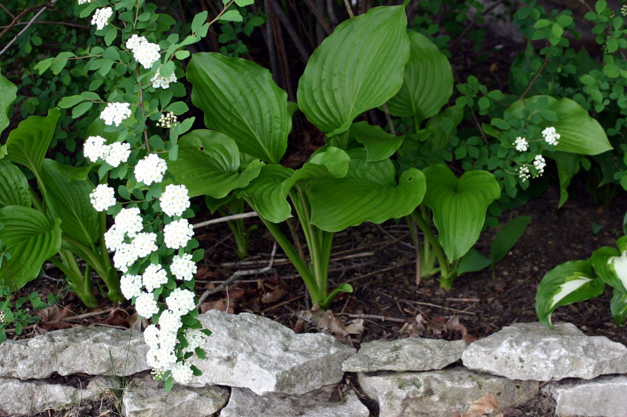 Plants with Rock Border