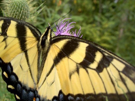 Allergen-Free Gardening Tips: Landscape Design Ideas for Allergy Sufferers