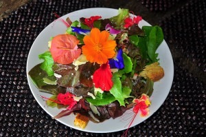 10 Edible Flowers To Consider Growing In Your Garden