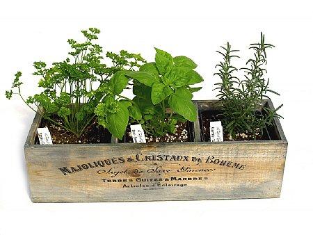 Gardener gift - herb garden