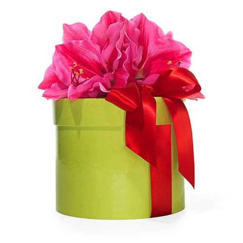 Gift for gardener - bulb set