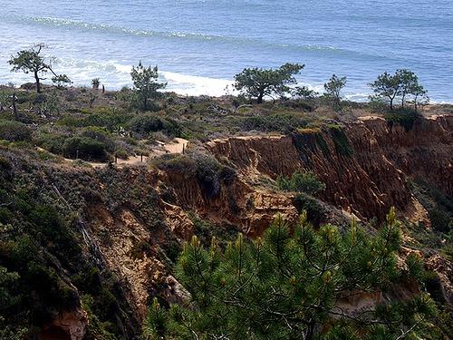 torrey pine state park