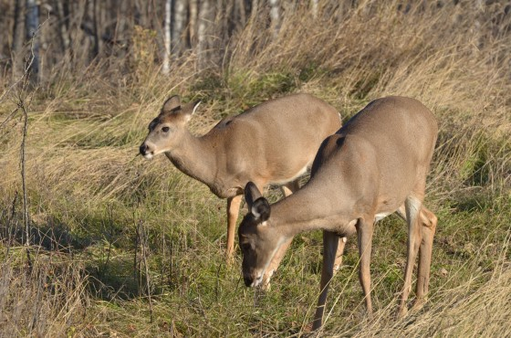 Backyard Landscaping Tips: How to Keep Wildlife Out of Your Yard