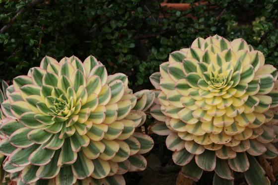 nifty 50 plants