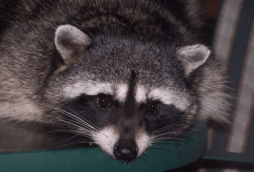 5 Creatures Found in San Diego Backyards and What to Do (Or Not) With Them