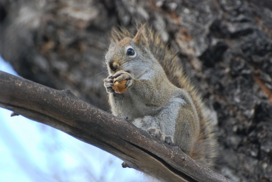Squirrels in your backyard
