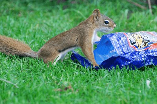 Squirrels in San Diego