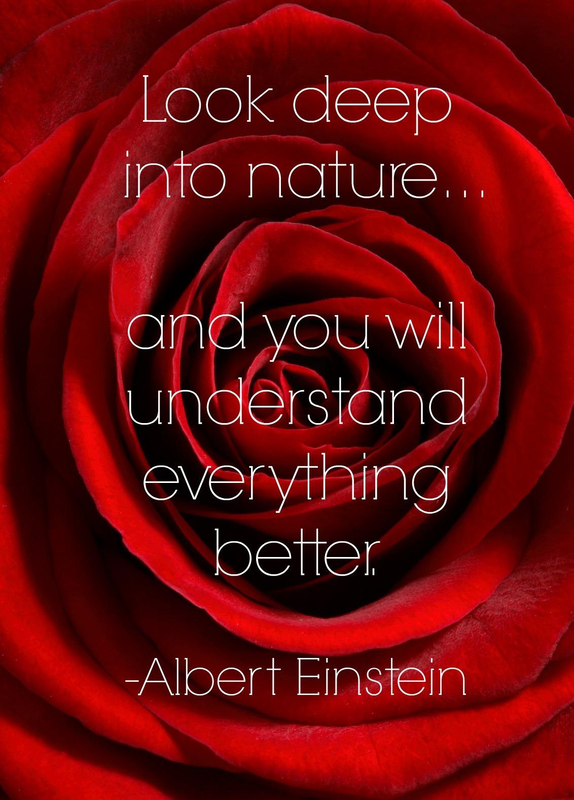 best gardening quotes Albert Einstein