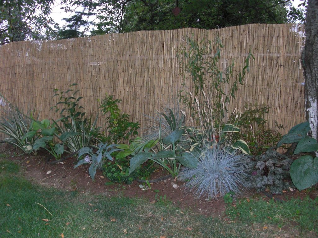 How to reface or hide an ugly fence install it direct - Garden ideas to hide fence ...