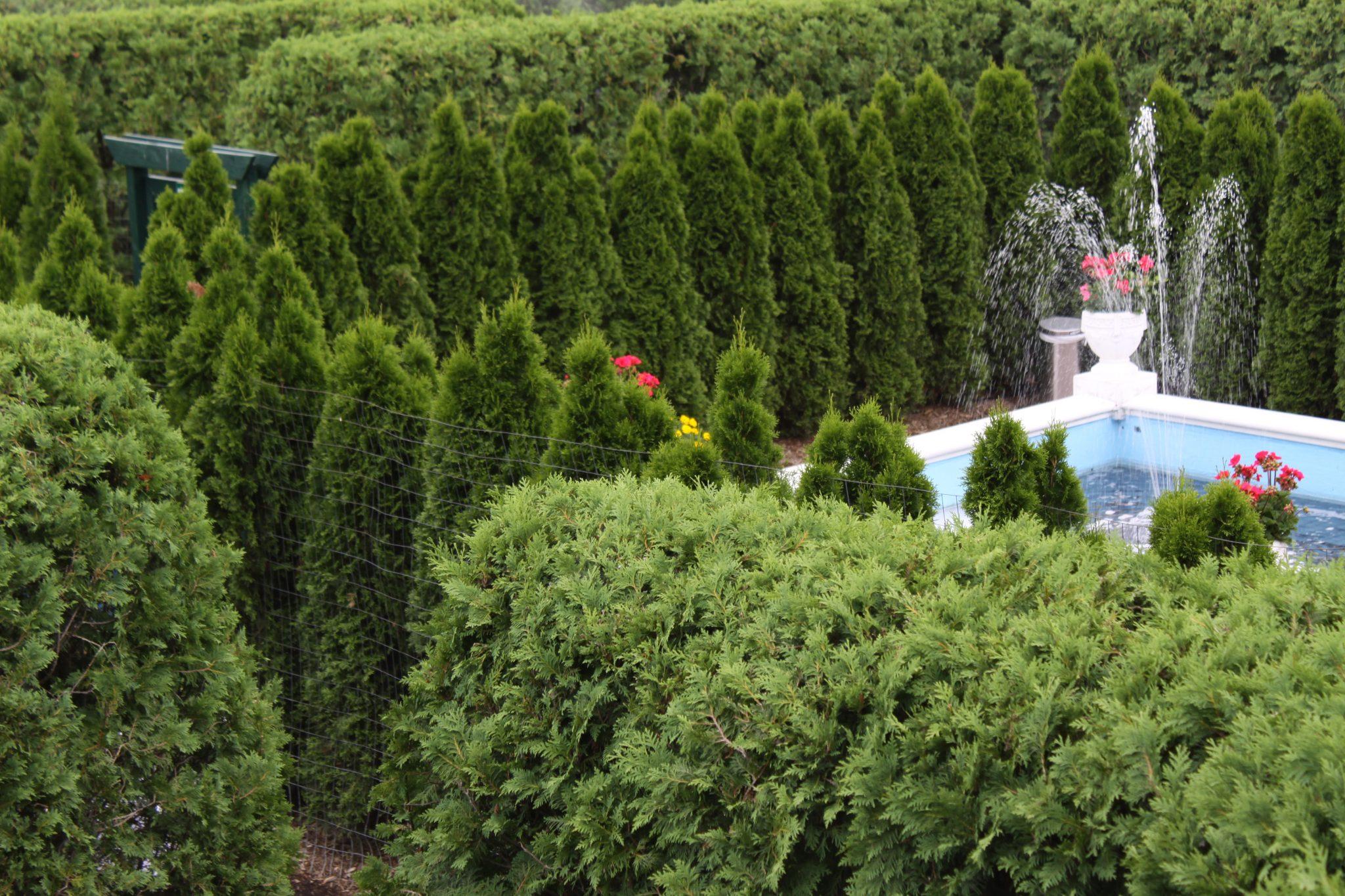 Fence Hidden by Foliage