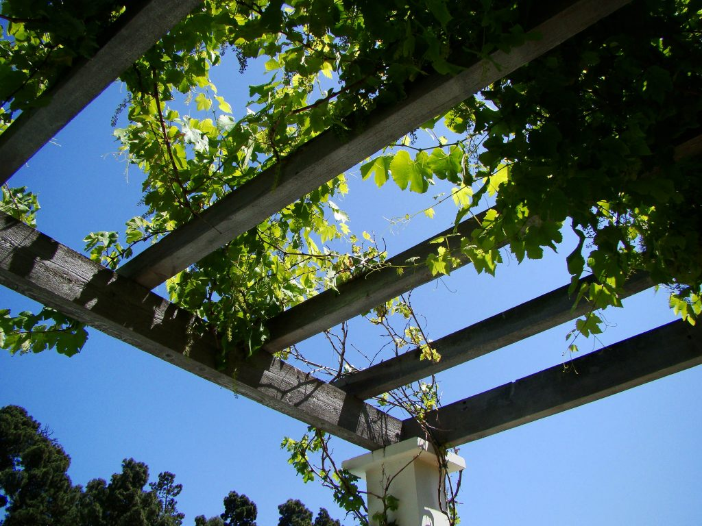 Save space with trellises and pergolas.