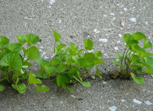 spring clean - exterior