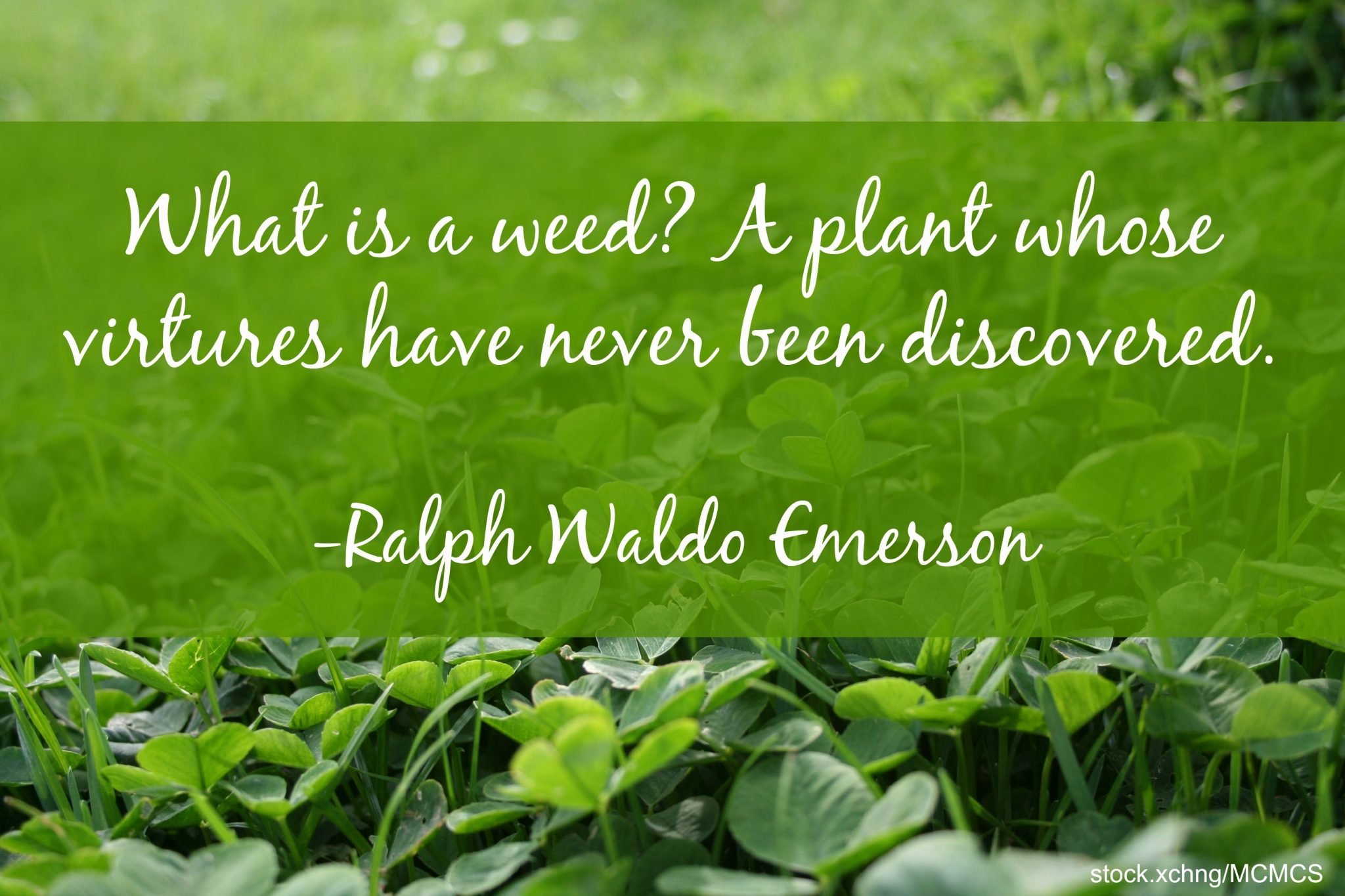 Garden Quotes: Best Gardening Quotes by Famous People | Install-It ...