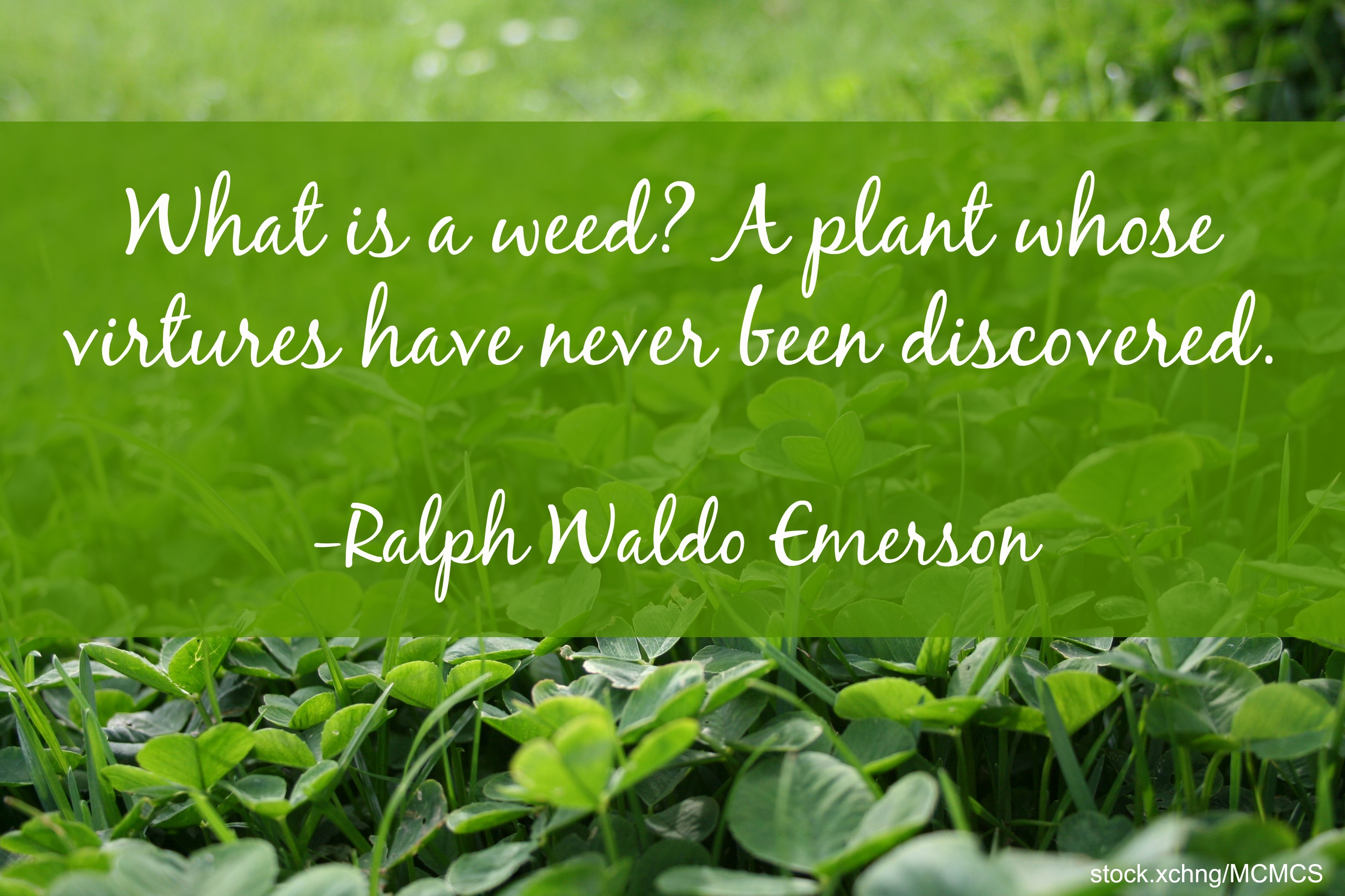 weed quote Ralph Waldo Emerson