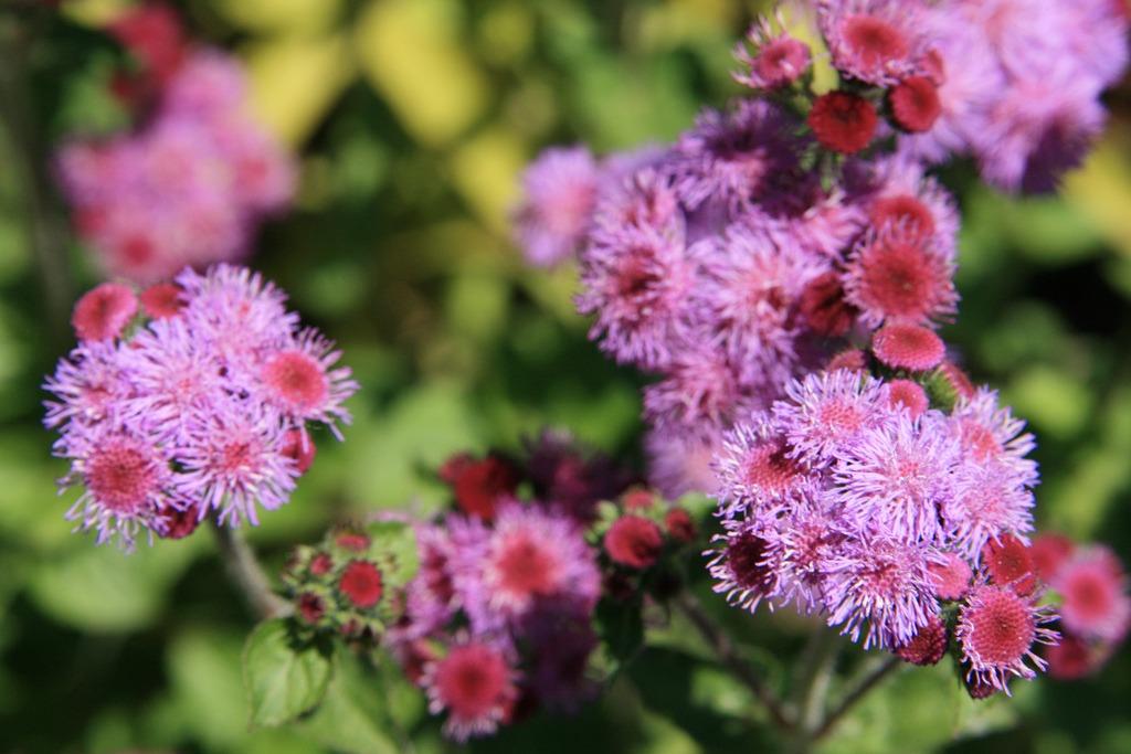 floss flowers