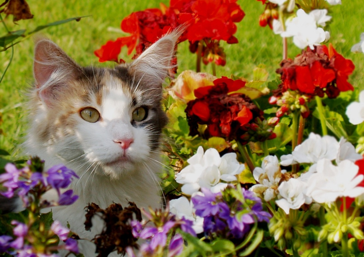 poisonous plants for dogs and cats