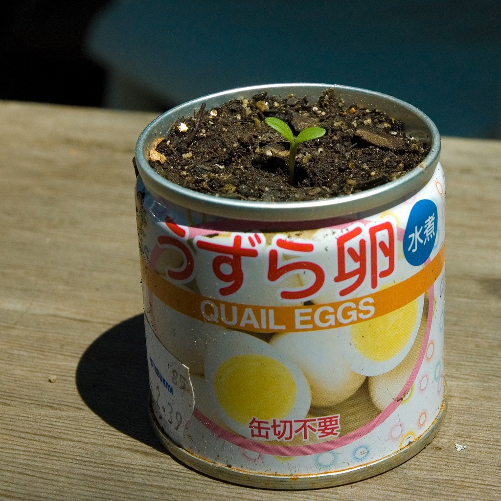 Start seeds in empty can