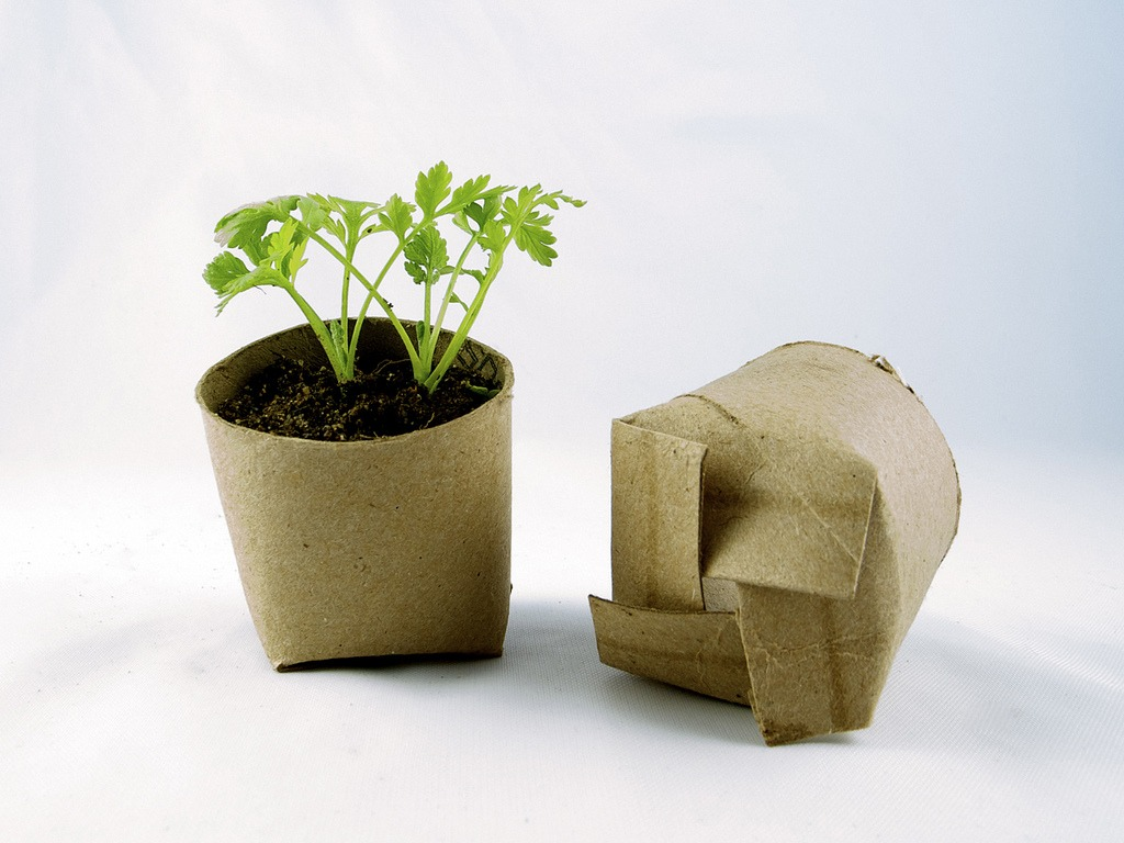 Toilet Paper Roll DIY Seed Pots