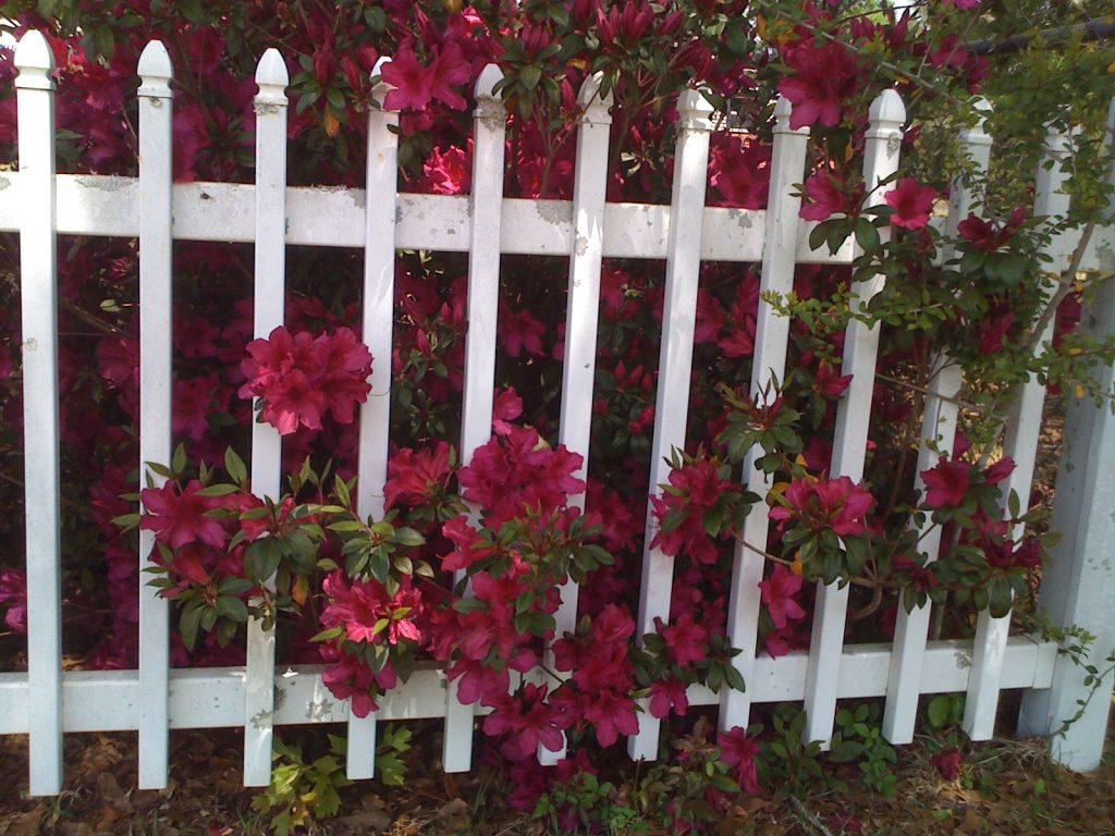 Create privacy with fencing and creative planting.