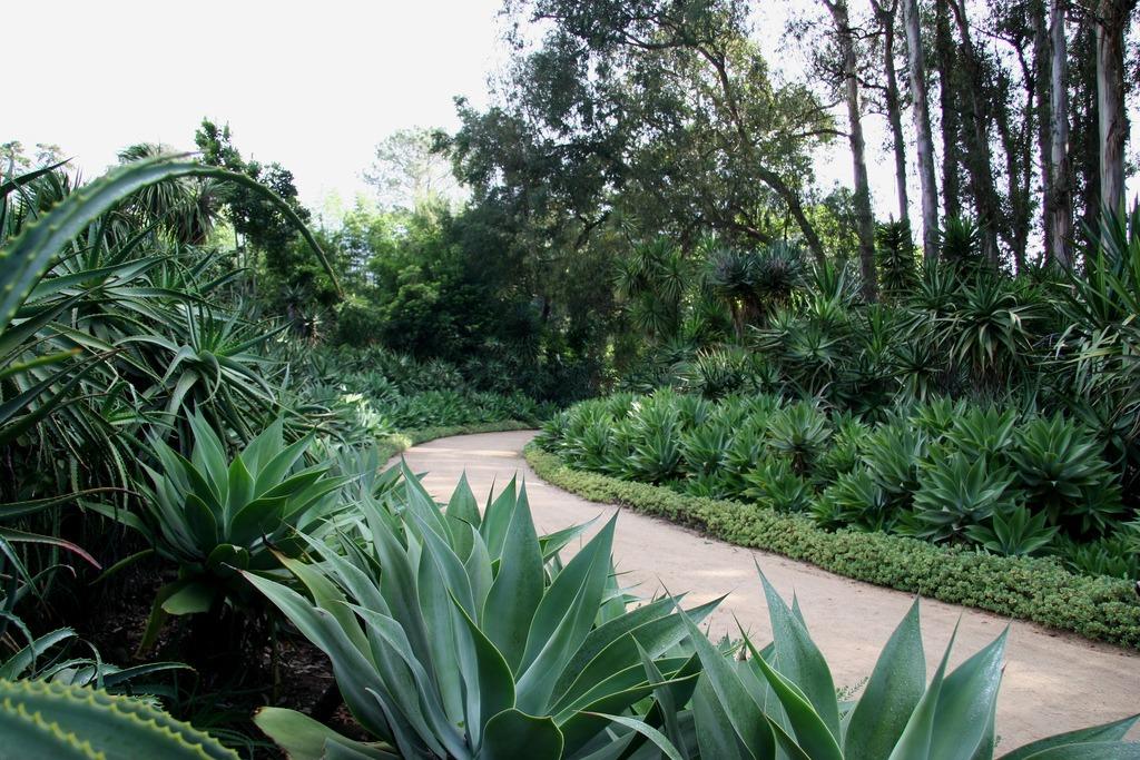fire safe plants agave attenuata