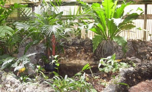 water garden ideas