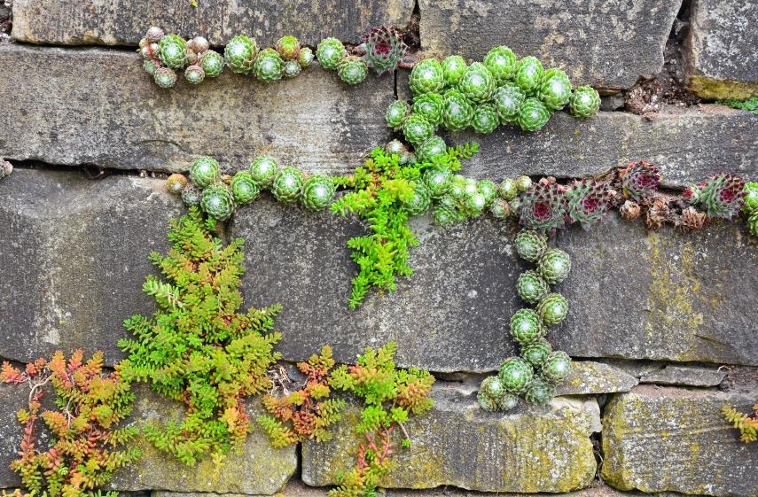 succulent pocket garden