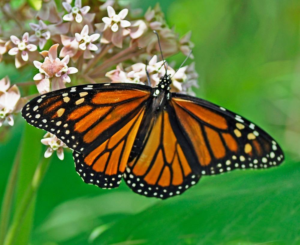 Butterfly Garden San Diego