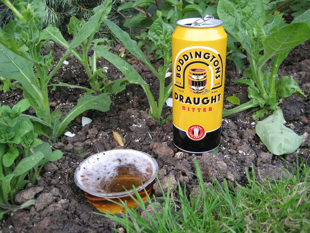 garden hacks snail beer