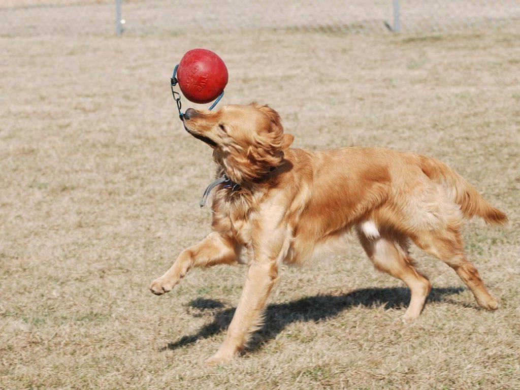 How to Create a Backyard Dog Park