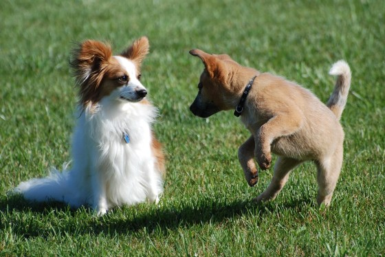Playing Puppy