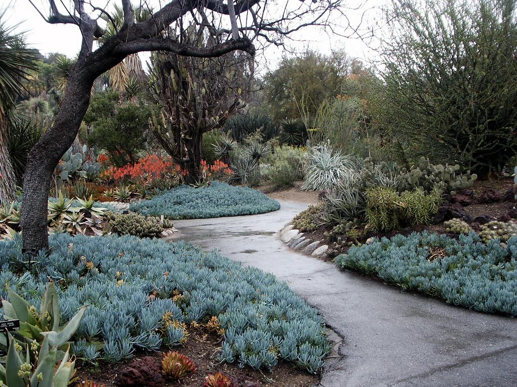 10 Easy Succulents for Your Drought Tolerant Garden