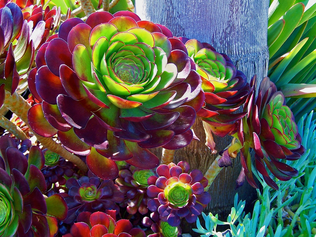 easy succulents california