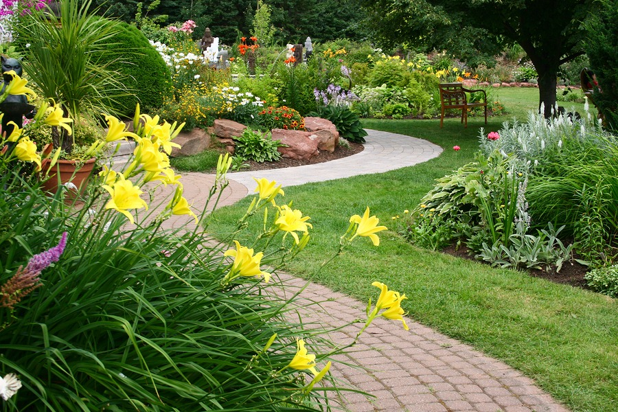 The Difference Between Annuals, Perennials and Biennials