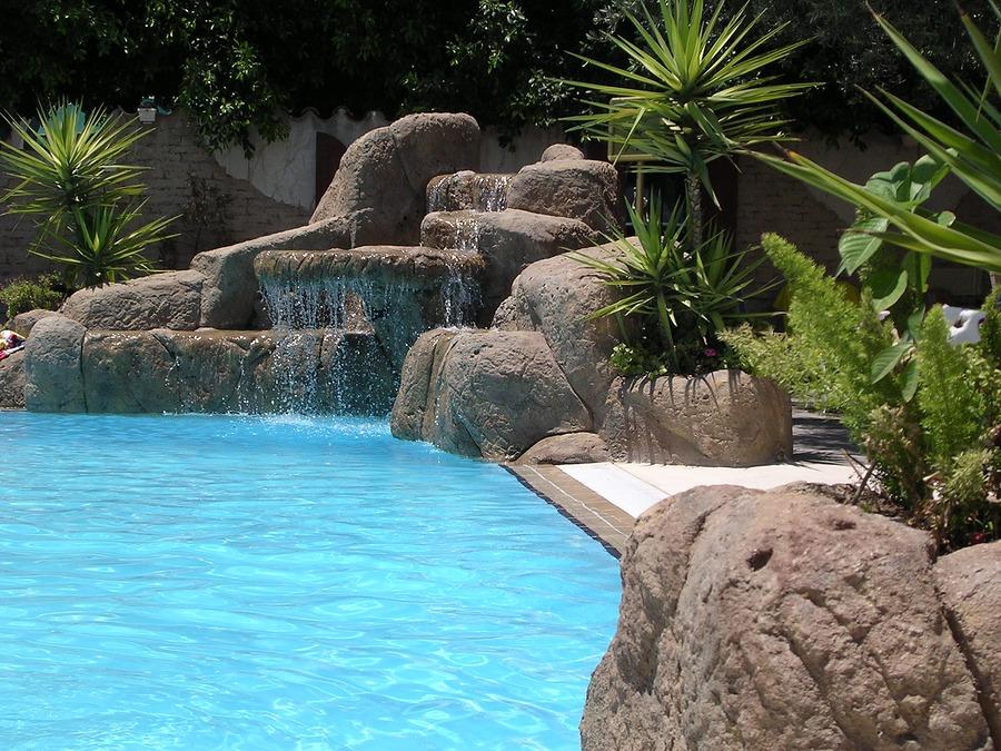 Tall plants near pool