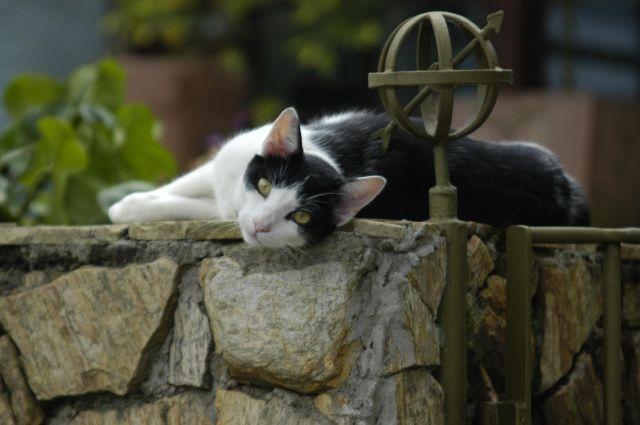 Cat friendly landscaping ideas