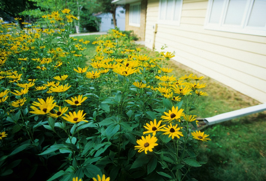 How To Build A Rain Garden Install It Direct