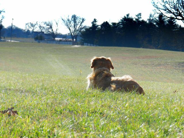 Pet friendly landscaping ideas