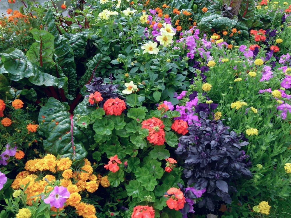How to plant an edible landscape install it direct for Flowers and gardens pictures