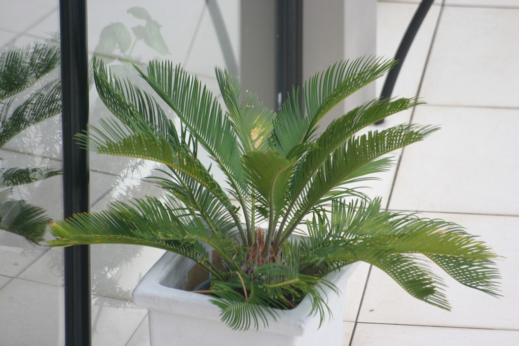palm tree container
