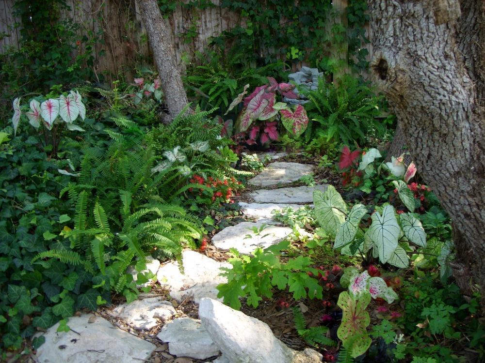 shade garden plants