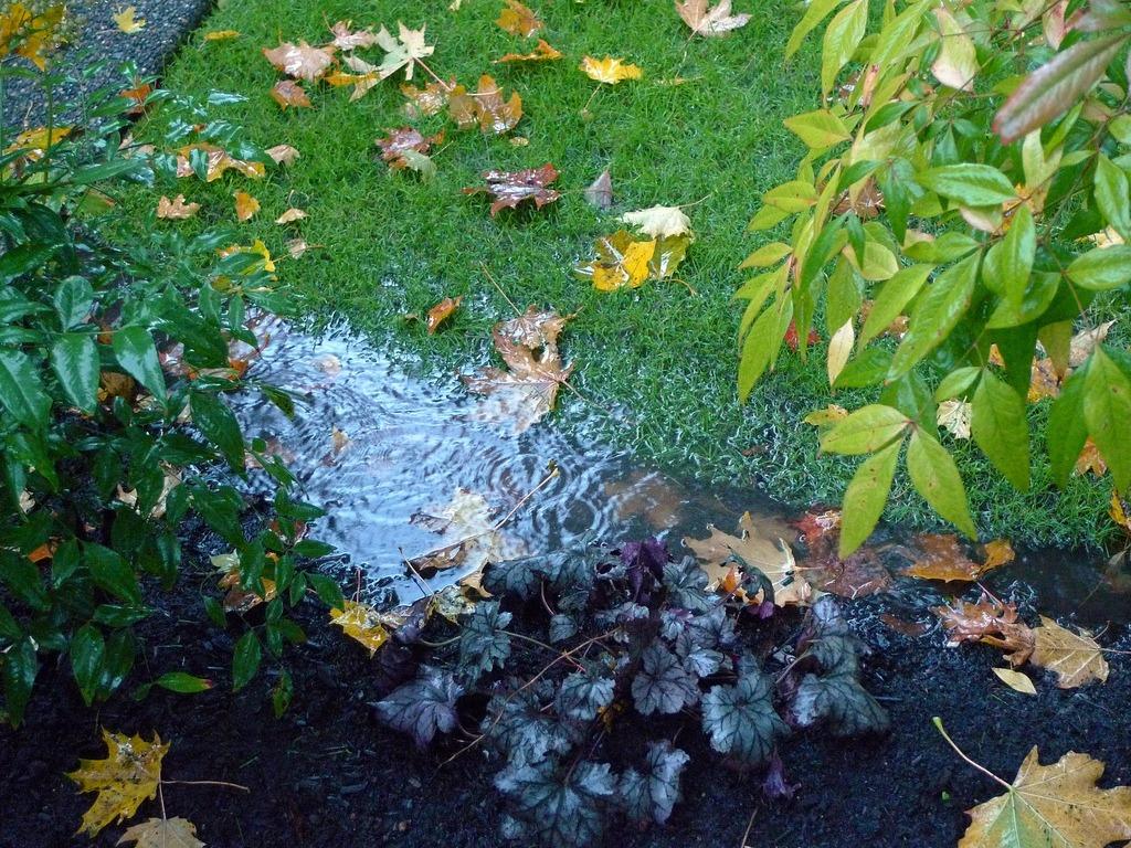 solutions for wet spots in garden