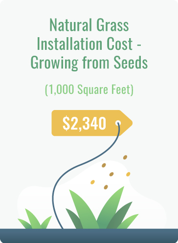 grow natural grass with seeds cost