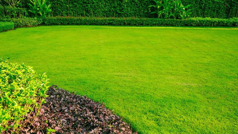 Natural Grass Lawn