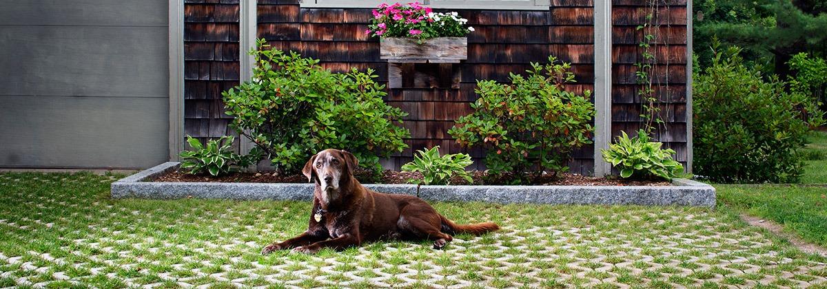 Dog on Turfstone (Belgard)