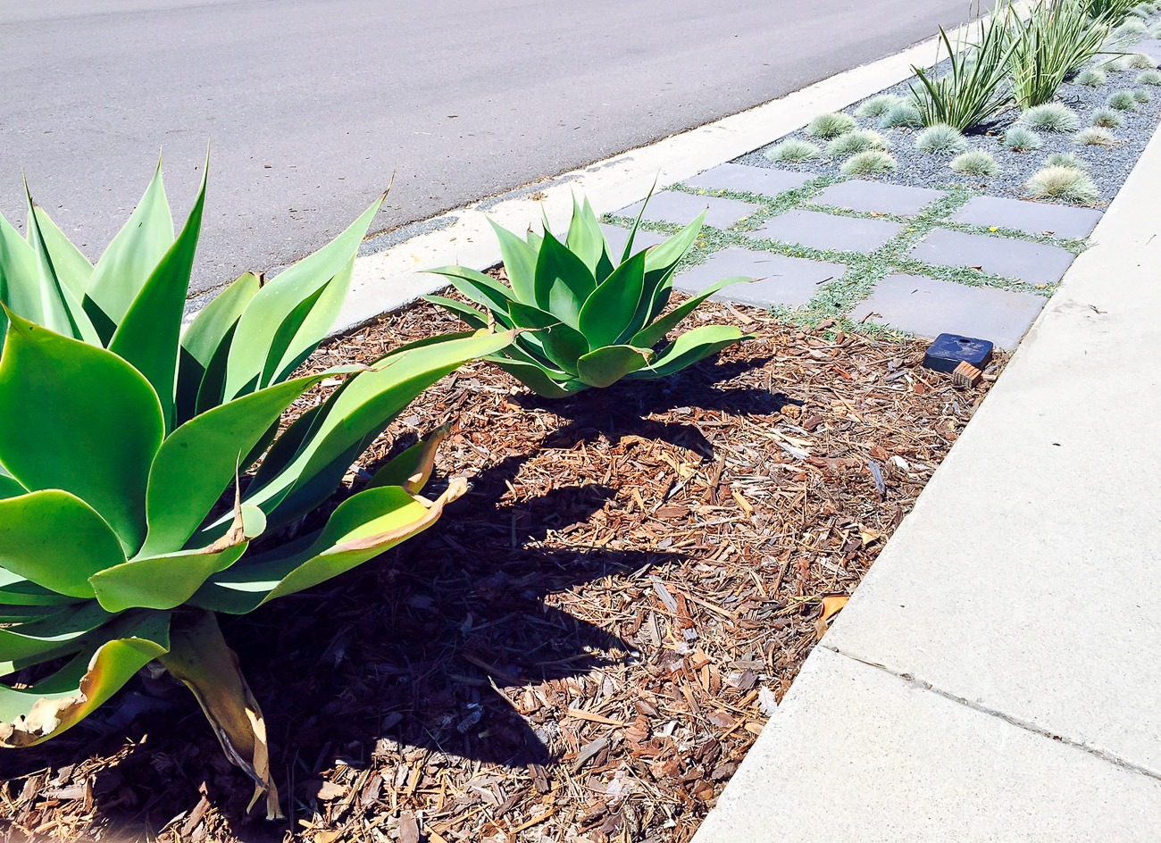 How to landscape a parking strip without grass install for Landscaping without plants