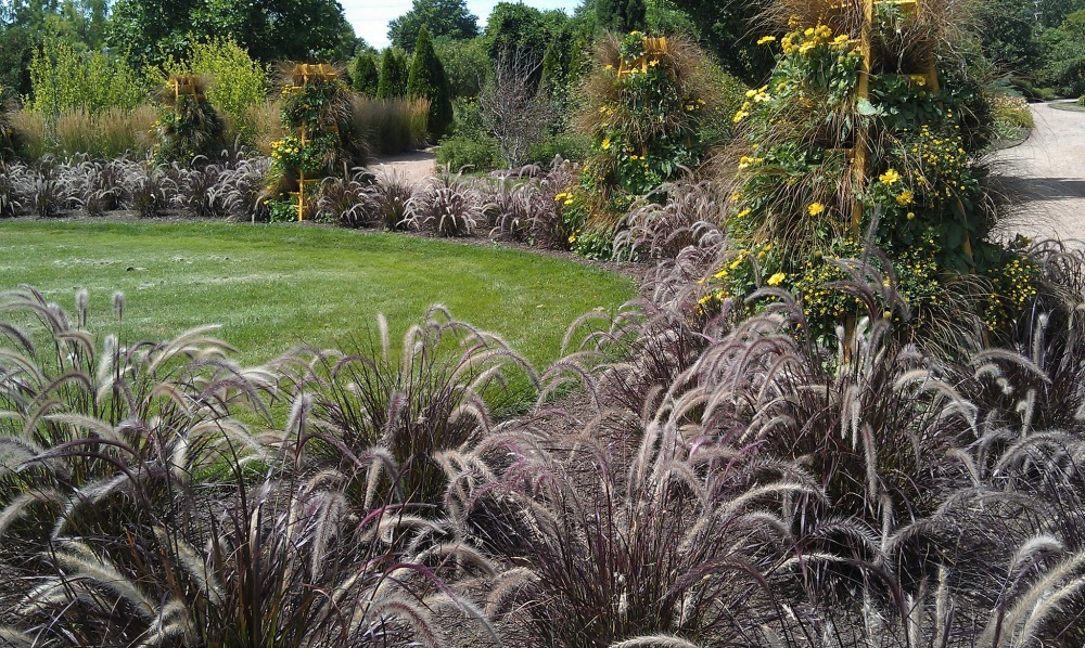 Great plants for drought that aren 39 t succulents install for Blue fountain grass