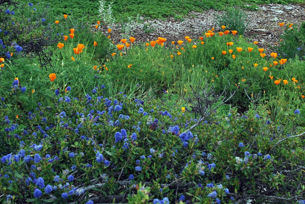Group native plants in clumps for pollinators
