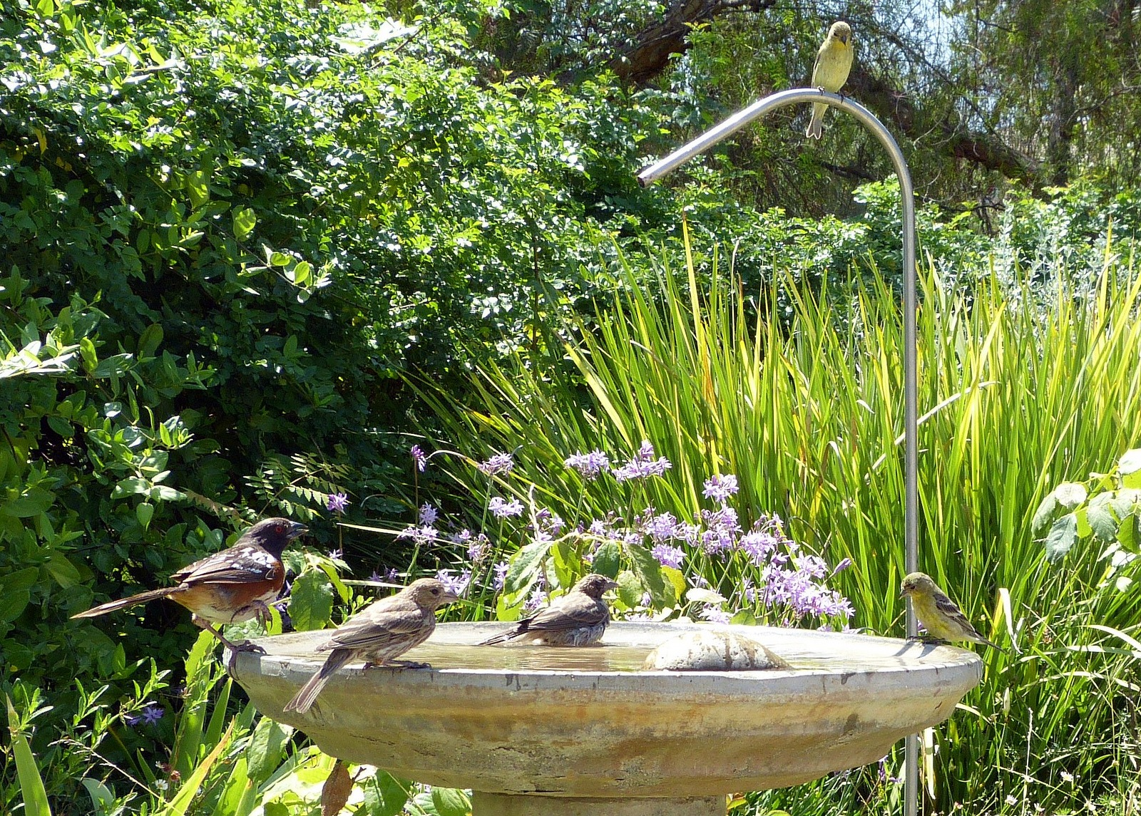 Leave water for pollinators in the garden