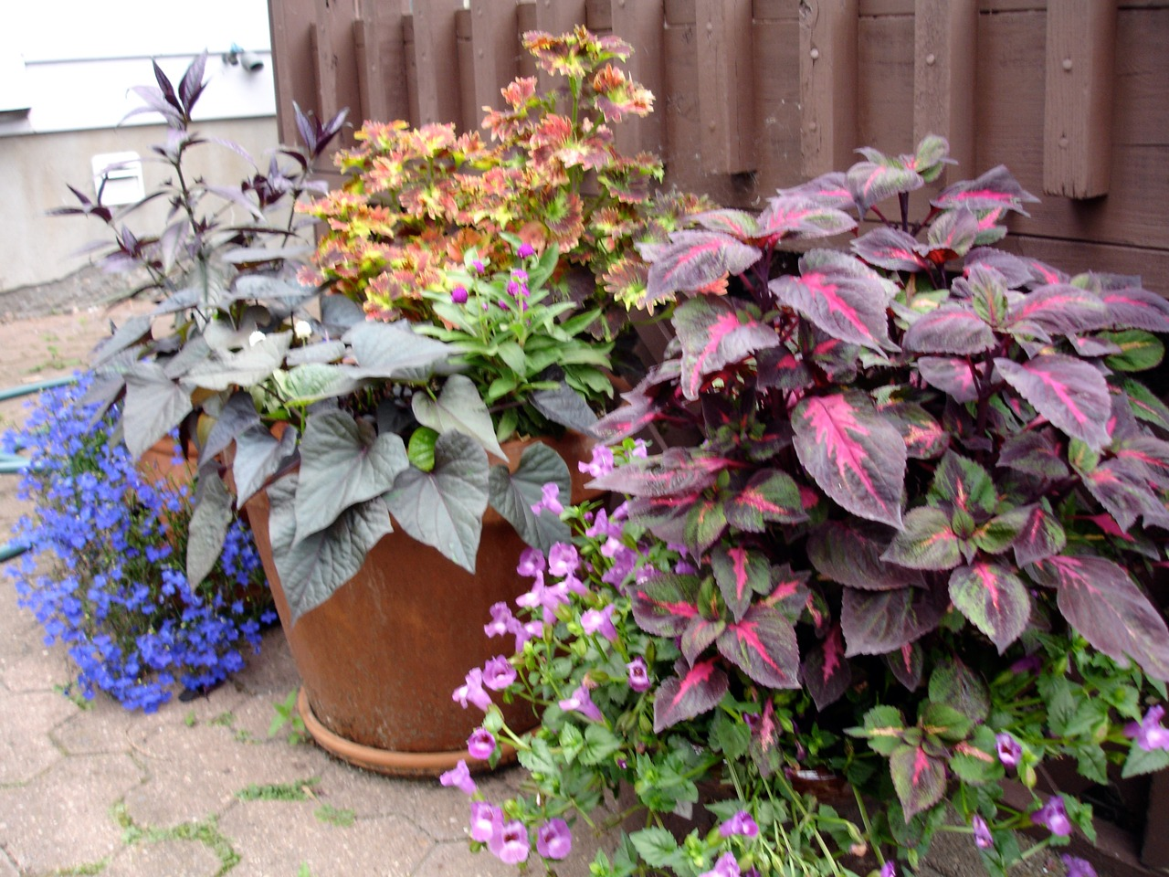 How to water container plants