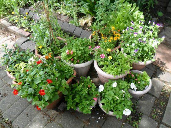 pretty container plants